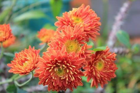 Bunga 10
