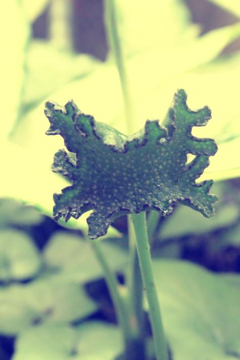 Bunga 8